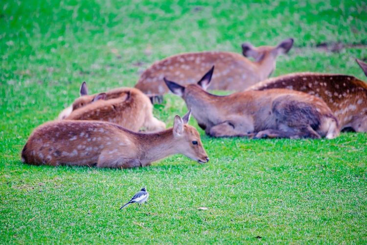 Animal Animal Themes Animal Wildlife Plant Grass Mammal Animals In The Wild Group Of Animals Deer Nature Vertebrate No People Green Color Relaxation Day Land Outdoors Field Domestic Animals Herbivorous