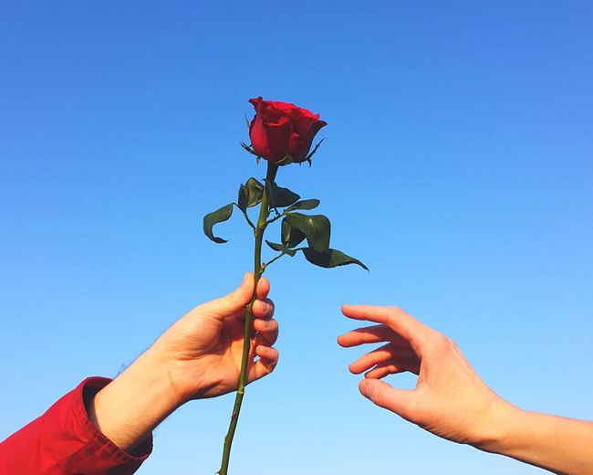 Cropped hand of woman giving red rose to friend against clear blue sky