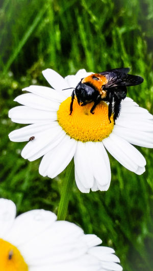 taken with samsung galaxy s5 Spring Bee