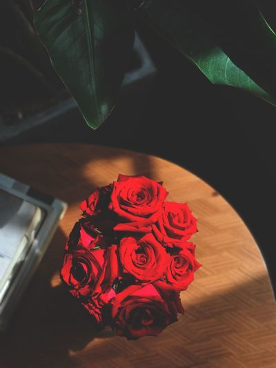 Vintage Time Time Vintage Rosé Indoors  High Angle View Red Rose - Flower Flower Flowering Plant Table Love