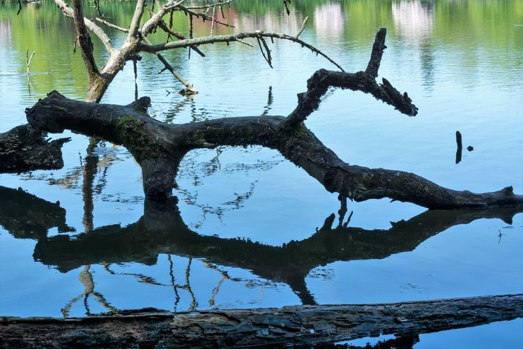 Water Reflection Lake Plant Tranquility Tree Nature No People Day Beauty In Nature Waterfront Outdoors Tranquil Scene Tree Trunk Trunk Wood - Material High Angle View Wood Animal Wildlife Driftwood