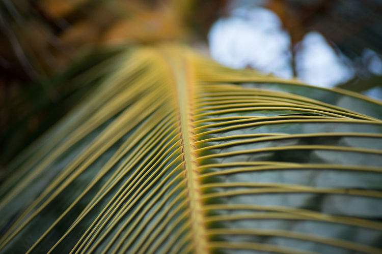 Close-up Frond