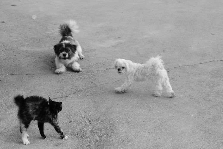 Dog and Cat Duel 1 Dog Cat Pets Animal Animal Themes Day Outdoors No People EyeEm Selects Black And White Pet Portraits The Street Photographer - 2018 EyeEm Awards The Troublemakers This Is Natural Beauty