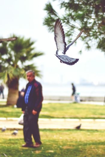 Flying Bird One Man Only Spread Wings Animal Themes One Person Outdoors Animals In The Wild EyeEm Best Shots - Nature Sea And Sky Tourism Travel EyeEm Best Shots EyeEm Gallery EyeEm Best Edits EyeEm Selects Cloud - Sky EyeEm Animal Lover Mid-air Silhouette Karşıyaka-İzmir/Turkey
