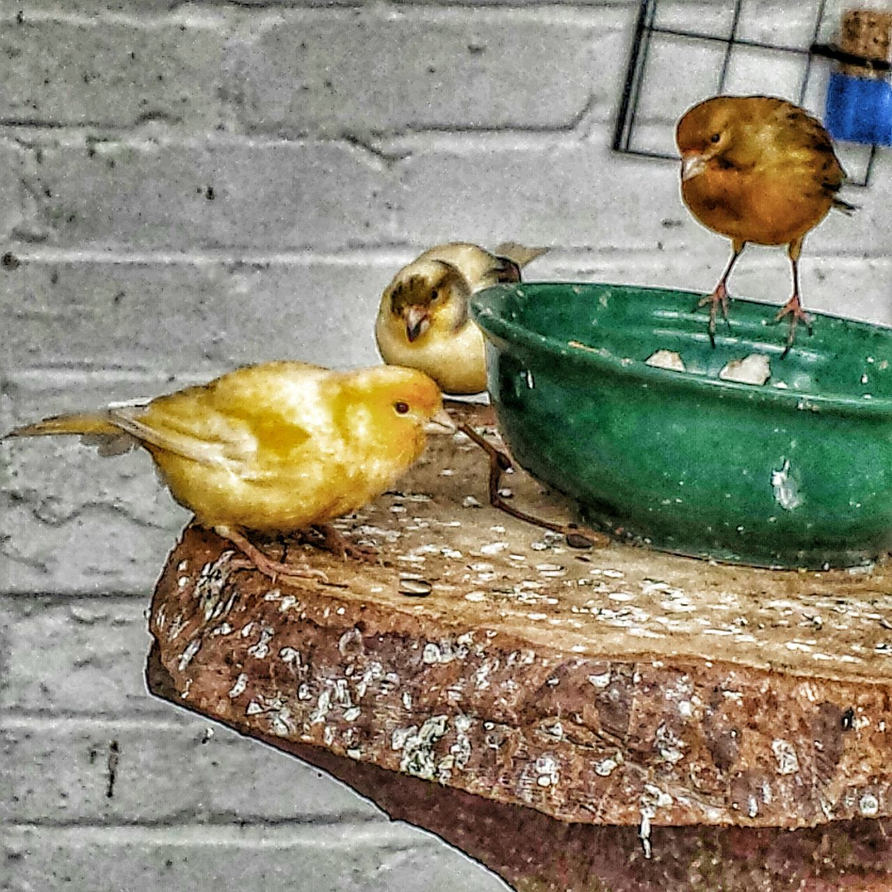animal themes, bird, one animal, perching, food, no people, animals in the wild, food and drink, animal wildlife, eating, close-up, bird feeder, sparrow, day, outdoors, nature, mammal