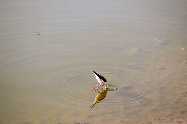Peekaboo Waterbird Bird Of Prey Bird Spread Wings Flying Full Length Animal Themes