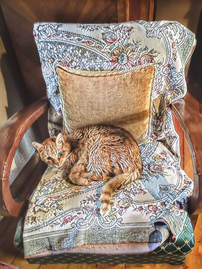 CAT One Animal Domestic Animals Indoors  Lying Down Ginger Cat Animal Themes Cat Pets Domestic Cat Sitting Chair