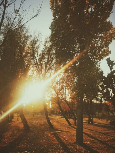 Sunset Landscape Autumn Leaves Nature Autumn Autumn Colours Beauty In Nature Mobile Photography Outdoors Branches XperiaM5 Our Best Pics Sony Xperia Sony Mobile Getting Inspired EyeEm Best Shots EyeEm Masterclass Growth Colours Street Photography Trees Shadow Light And Shadow
