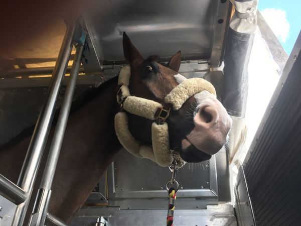 Domestic Animals Mammal Animal Themes One Animal Pets Indoors  No People Home Interior Close-up Portrait Dog Day Cargo Aircraft Horse Trailer Transportation Horse Show Horse