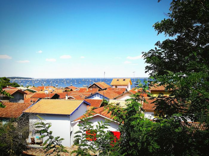 EyeEm Selects Water Sea Beach Clear Sky Tree Sky Horizon Over Water