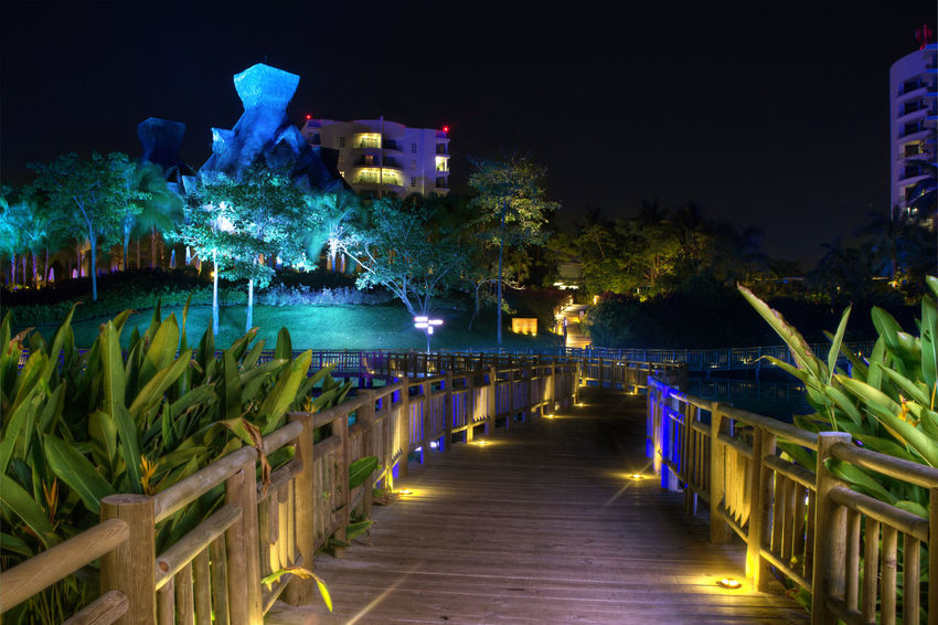 Architecture Blue Built Structure Diminishing Perspective Empty Green Color Growth Illuminated In A Row Multi Colored Nature Night No People Outdoors Plant Sky The Architect - 2016 EyeEm Awards The Way Forward Tranquility Vanishing Point Walkway