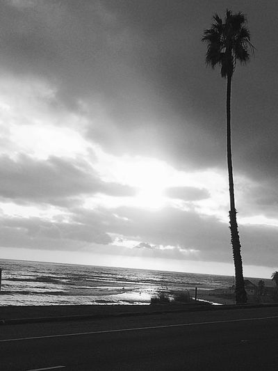 Sea Beach Palm Tree Tranquility B&w B&w Photography B&W Collection Water Beauty In Nature Horizon Over Water Outdoors Nature PCH California California Coast California Dreaming California Sunset Sunset No People Cloud - Sky Sand Coastal California Beautiful Roadtrip