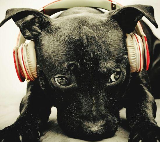 Animal Photography Music