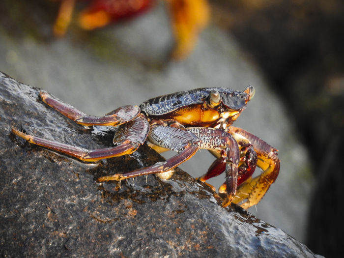 Close-up of insect on rock