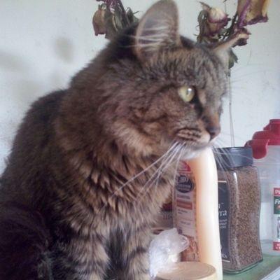 Внимательный Кузя. кузя Кузьма Cat любимыйкот люблюмягкихшкурок Кошастики кошки любителямкошек