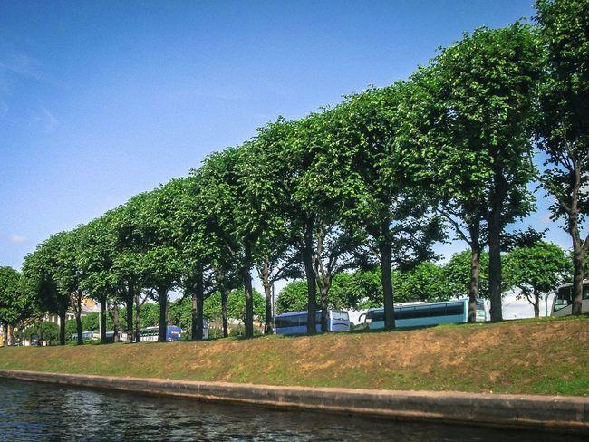 Trees River Green Buses Leningrad Sain Petersburg Russia