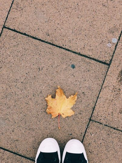High angle view of maple leaves on footpath