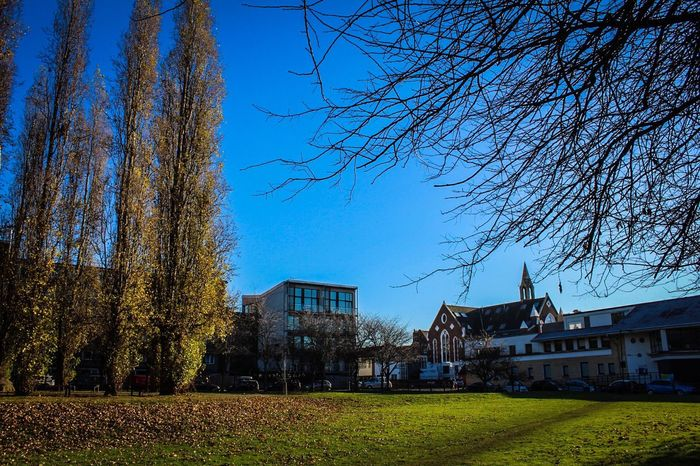 Building Exterior Tree Architecture Built Structure Bare Tree Sky Clear Sky Outdoors No People Nature Day Talltrees Blue Sky Grass Fallen Leaves Dwellings Flats Park Park - Man Made Space Outdoor Outdoor Photography