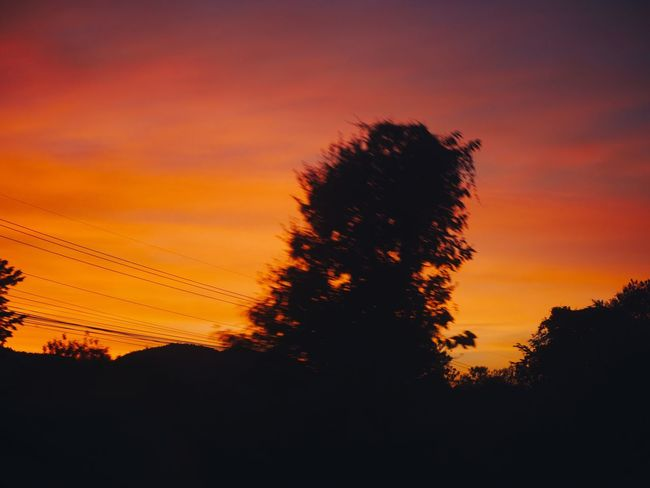 🌳 Sunset Sky Silhouette Plant Tree Orange Color Beauty In Nature