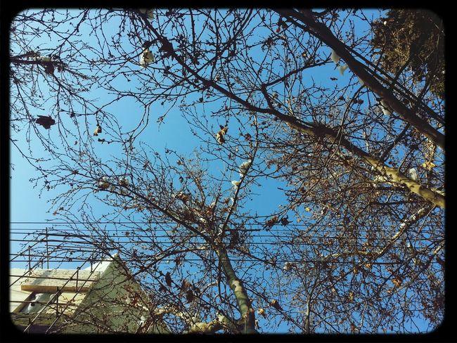 Blue Sky آسمون آبی