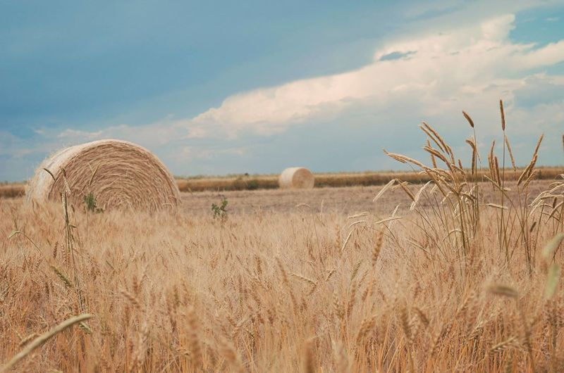 Agriculture Bale  Cloud - Sky Farm Field Hay Hay Bale Haystack Landscape Nature No People Outdoors Rural Scene Sky Wheat