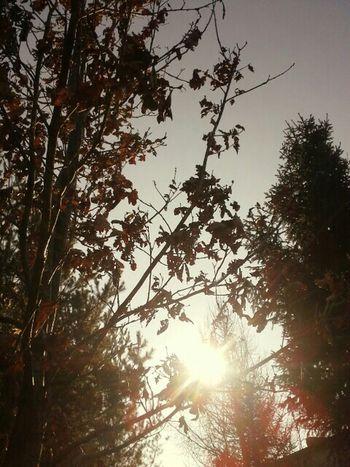 Nature Sunrise Lovely Weather Enjoying The Sun