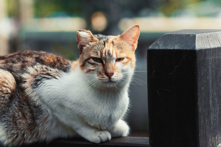 Lost in Houtong cat village, New Taipei City Animal Themes Carnivora Cat Village Close-up Day Domestic Animals Domestic Cat Feline Focus On Foreground Houtong Cat Village Looking At Camera Mammal New TaipeiCity No People One Animal Outdoors Pets Portrait Taipei Taiwan Whisker