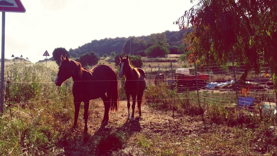 Horses in the sun Horses Horses Are My Life Horse Lover Horse Photography  Horse Life