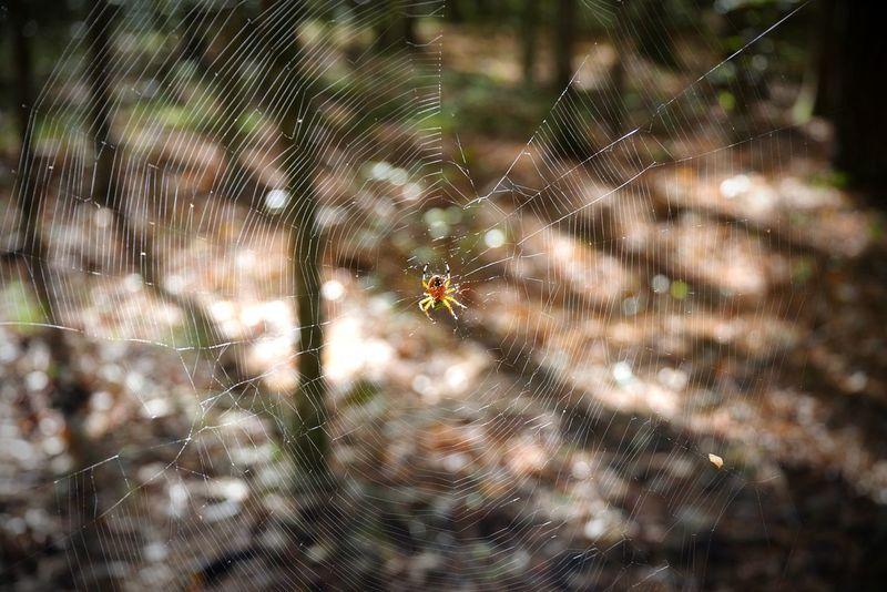 Spider Insect Spider Spider Web Bokeh Nature Focus On Foreground Close-up Nature Beauty In Nature Bokeh Bubbles Bokehlicious Dof Nature Dof Dof_brilliance Outdoors No People Nature North Carolina Pentaxk1 EyeEm Nature Lover Emeyebestshot EyeEmNewHere EyeEm Best Shots PENTAX K1 Bokeheffect