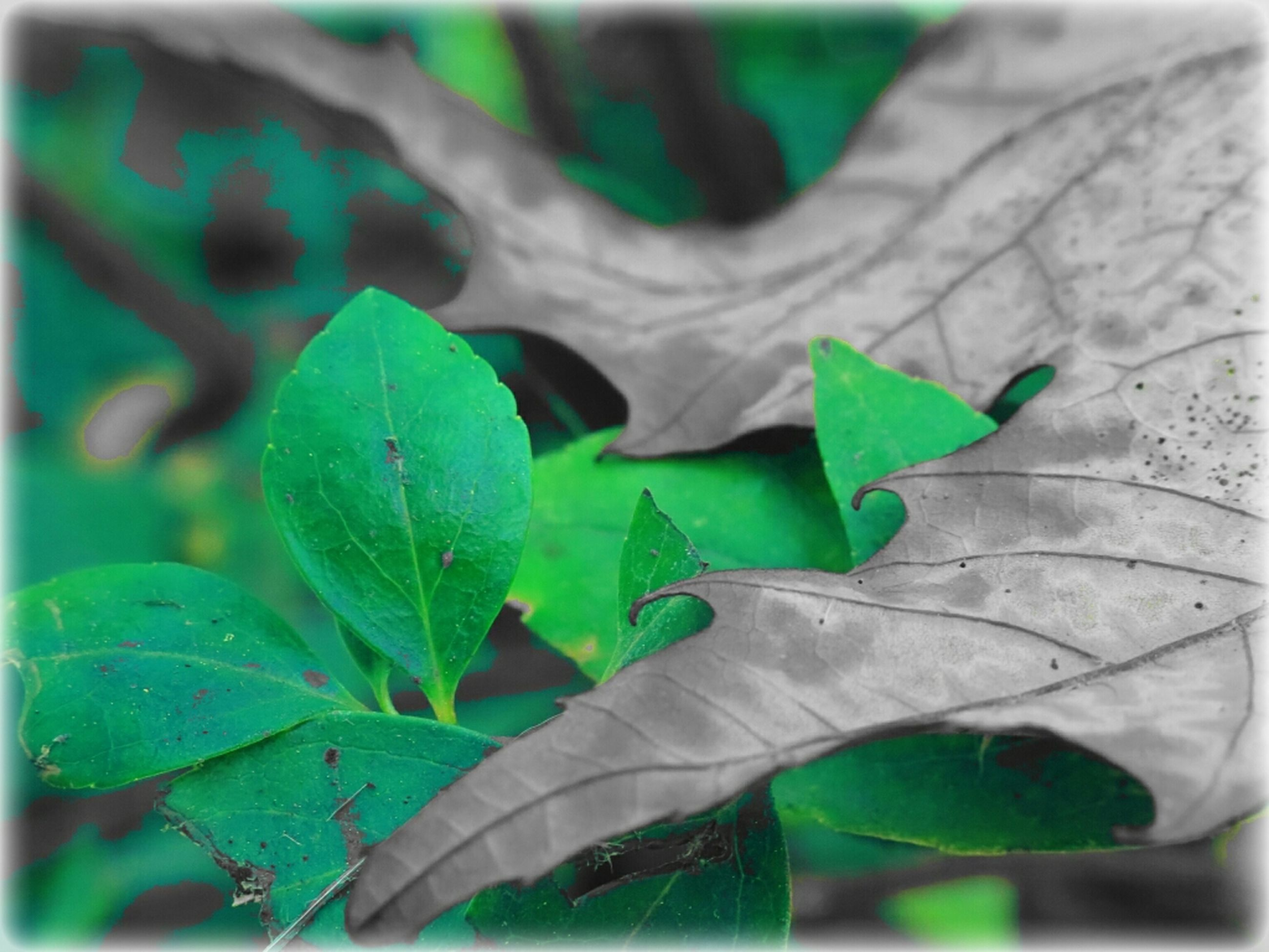 leaf, leaf vein, green color, close-up, focus on foreground, plant, leaves, nature, growth, selective focus, natural pattern, auto post production filter, transfer print, green, beauty in nature, outdoors, day, no people, fragility, high angle view
