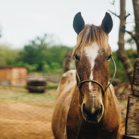 Pet Portraits One Animal Mammal Animal Animal Body Part Horse Animal Themes Animal Wildlife Domestic Animals Animals In The Wild Day Outdoors No People Nature Tree Close-up Oil Pump