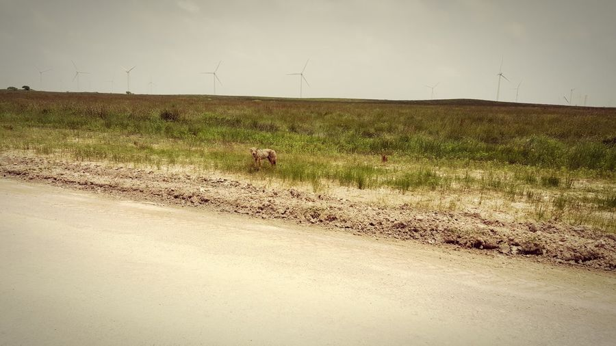 Taking Photos Check This Out Cayote Wildlife