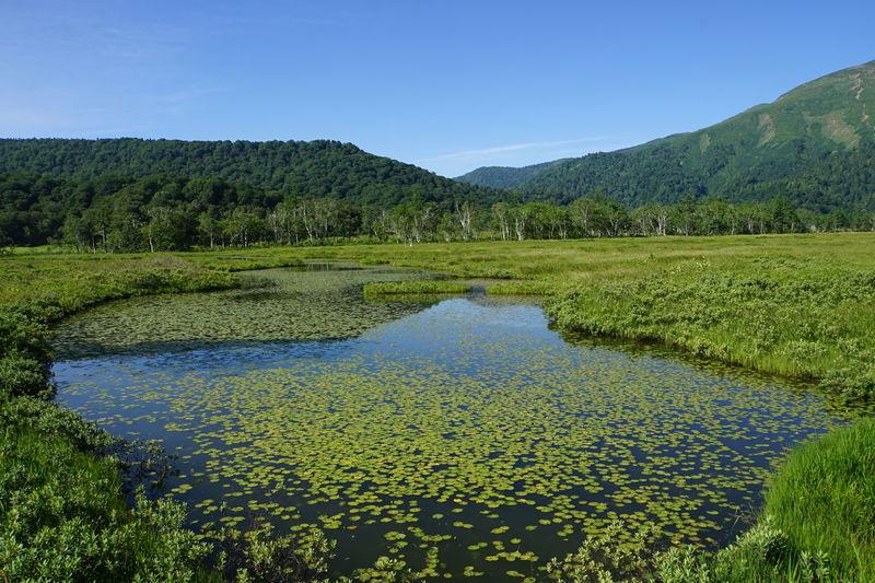 Pond Waterweed Landscape Landscape Correction EyeEm Nature Lover Nature_collection EyeEm Best Shots
