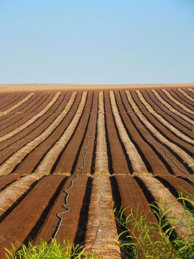 Surface Level Of Agricultural Landscape Against Clear Sky