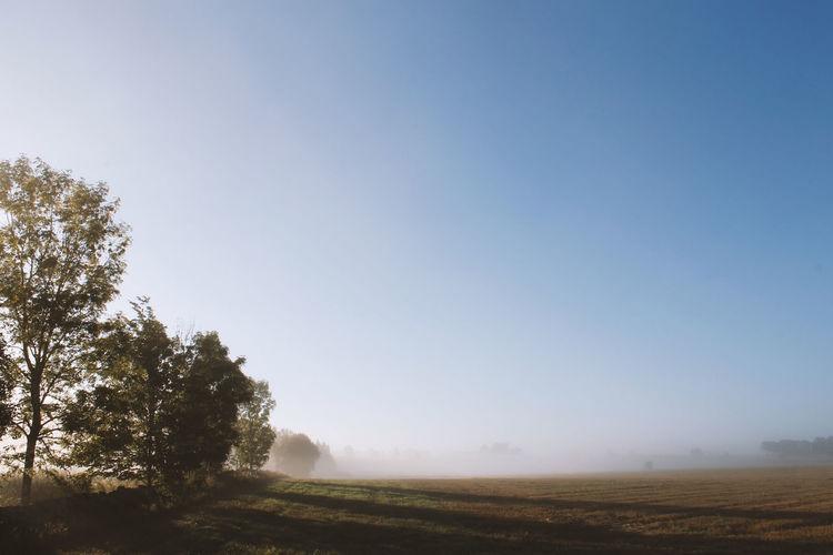 Autumn morning Autumn Autumn Collection Beauty In Nature Dew Fog Fuktiga Gods Rays Haze Höst Höstmorgon Jakt Meadow Mist Morning Morning Light Nature No People No People, Oak Pine Rays Of Light Rays Of Sunshine Sweden Tranquility Västergötland