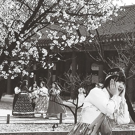 Cherry Blossoms Pose Seoul Spring Joseon Dynasty Gyeongbokgung Palace, Seoul 1392 -1897 Kr_streetphotography Seoulstreetphotography Streetphotography Hanboks Spring Seoul South Korea Seoulspring2017