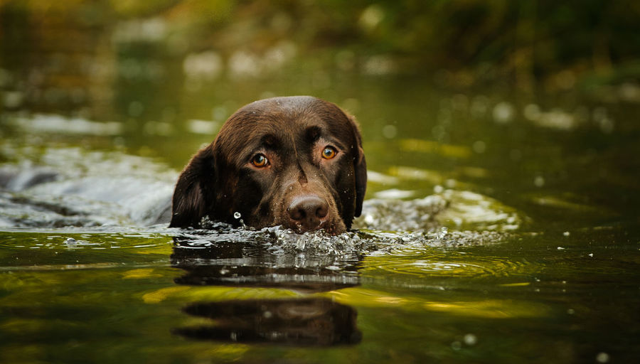 View of dog swimming in water