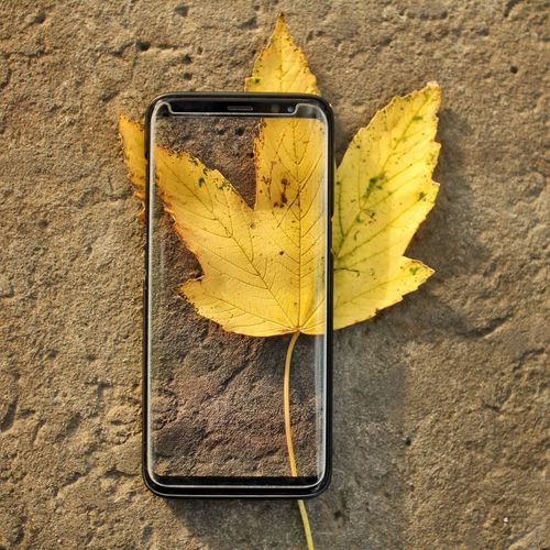 Smart Phone Display Visual Creativity Visual Effects Autumn Autumn colors Yellow High Angle View Close-up Fall Textured  Cellphone Portable Information Device Detail