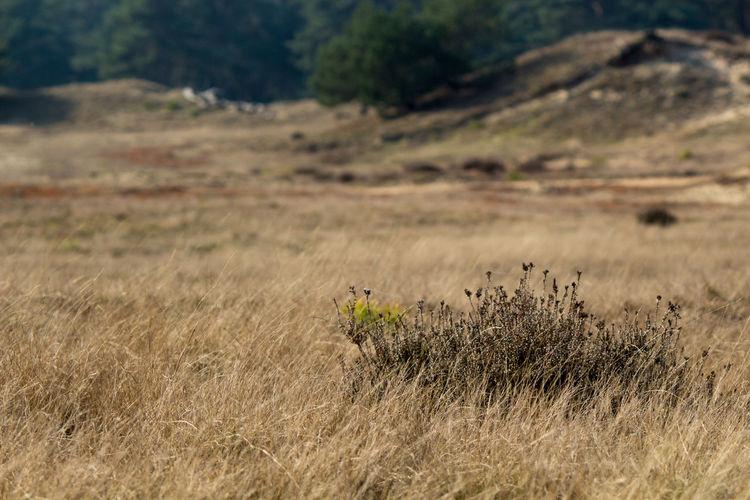 Day Grass Hoge