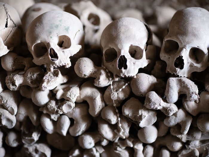 Human Skeleton Human Skull Human Bone Bone  Human Body Part Fear Indoors  Skeleton Close-up Spooky Large Group Of Objects Still Life Horror High Angle View Skull Body Part Group The Past