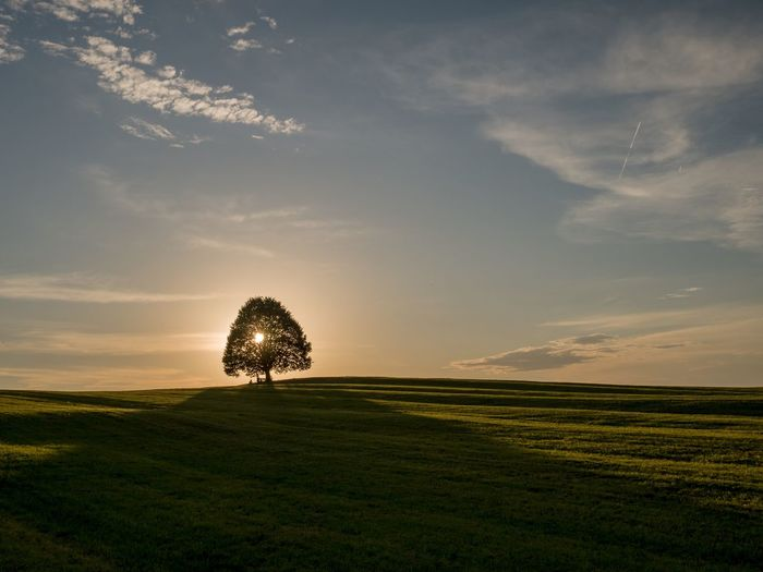 Tree on land against sky during sunset