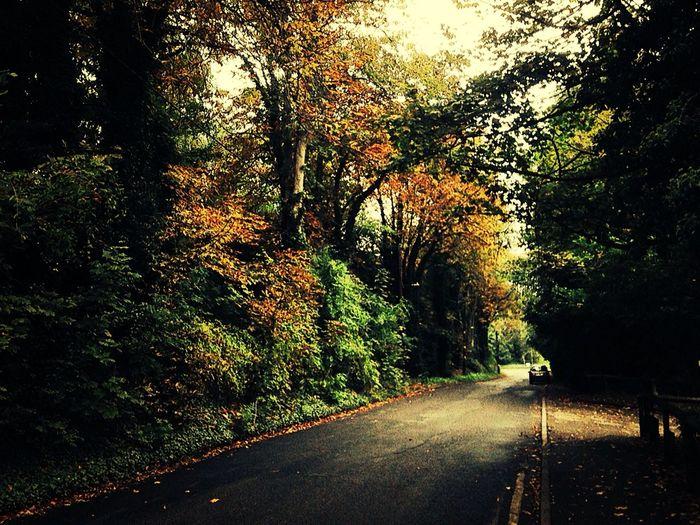 Autumn Leaves ?