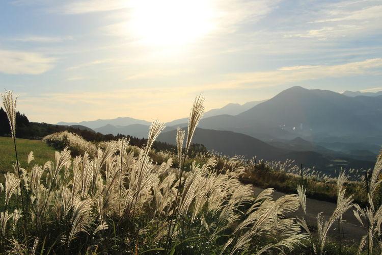 Plants on landscape against mountain range
