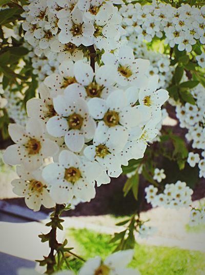 EyeEm Nature Lover My Garden Relaxing Flowers Nature Spring