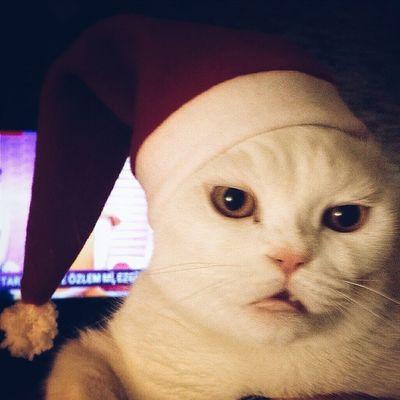 ???Merry Christmas ??? @sheroocat
