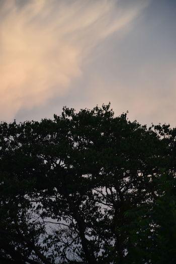 Tree Sky Plant