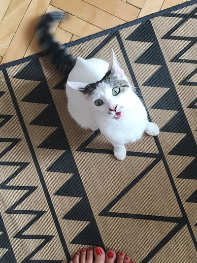 High angle view portrait of cat on floor at home