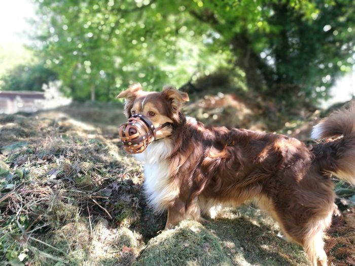 Pets Protruding Dog Sticking Out Tongue