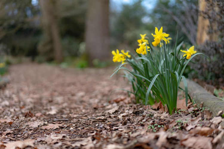 spring is coming Tree Yellow Summer Springtime Multi Colored Crocus Close-up Daffodil Pollen Blossom Botany Growing Plant Life Sunflower Wildflower Pistil First Eyeem Photo