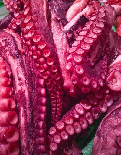 Octopus Full